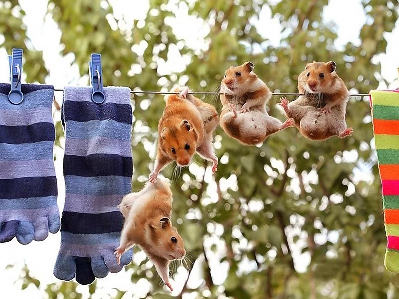 Hamsters Idiot