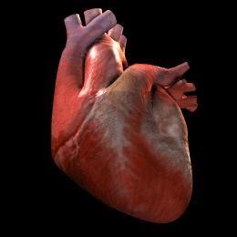 Integrative Cardiology & Preventative Medicine Center