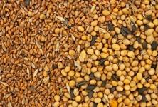 Navratna Seeds & Agrotech