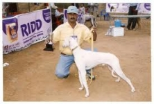 AJR Pets , Mangadu