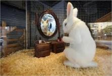 AP Pet Shop , Velachery Check Post