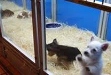 Dog Hostel , Chrompet