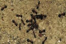 Accurate Pest Control