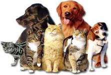 Commando Canine Care