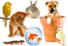 Wagging Tail Pet Care Pvt. Ltd. , HRBR Layout