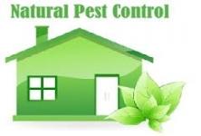 The City Pest Control Services , Saligramam
