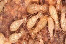 Alpha Pest Control , Ayanavaram