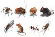 Nello Pest Control