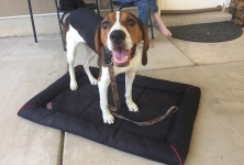 Cornerstone Dog Training